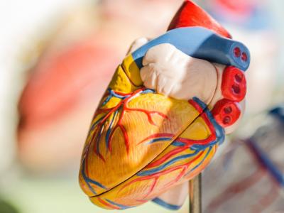 Cardiologists in Aurangabad